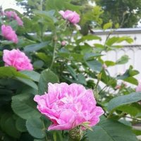 Цветы... Цветы :: Вера