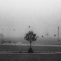 дерево счастья :: pervic першин