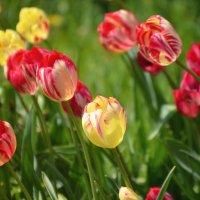 Весна цветущая :: Ирина