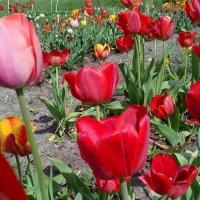 В моем саду :: ИГОРЬ ЧЕРКАСОВ