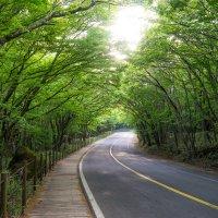 Jeju Road :: Илья Меркулов