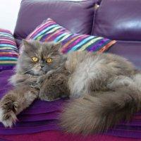 Красавица Kitti! :: Galina Dzubina