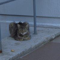 Добрые люди не пожалели для кошки кусочек сушки :: Андрей Лукьянов