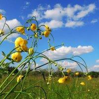 Лютики-цветочки :: Павлова Татьяна Павлова