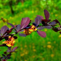 Весна в цвету :: Юрий