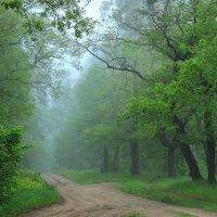 Вновь судьба пророчеством тумана... :: Лесо-Вед (Баранов)