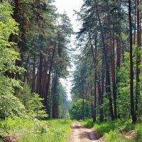 Памятью любимая дорога... :: Лесо-Вед (Баранов)