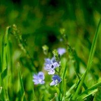цветок :: Валерия Святогорова