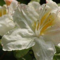 Фестиваль весенних цветов :: mirtine