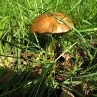 Майский гриб -- 2! :: Svetlana27