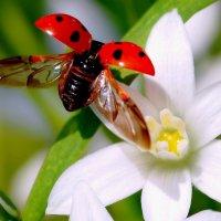 flying_ladybug :: Time Trouble