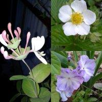 цветы-цветочки :: Oniks58 (Светлана Сибирина)