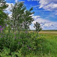 Весенний  день... :: Валера39 Василевский.