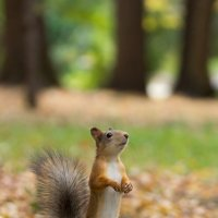 О орехи несут! :: Alex Bush