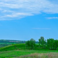 Дорога в березы :: Сергей Тагиров