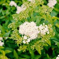 Blumen nach Deutschland :: Валентина Потулова