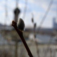 весна :: Дмитрий Паченков