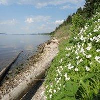 мыс Стрелка,река Кама :: Валерий Конев