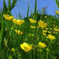 Лето цветет и пахнет !!! :: Татьяна ❁