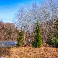 Весенний мотив :: Ильдар Шангараев