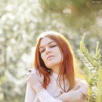 Солнце :: Сергей Гутерман