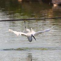 Без страховки не прыгаю !!! :: Ilan Grabois