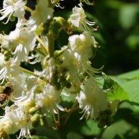 Собирать с цветов нектар, - в том пчелиный редкий дар. :: Валентина ツ ღ✿ღ