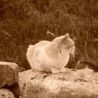 кот у моря. :: Андрeй Владимир-Молодой