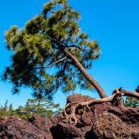 Граница Леса и остатков лавы после извержения :: Witalij Loewin