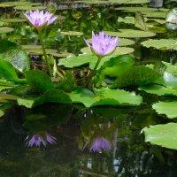 Любимый цветок :: Нина Ковзель