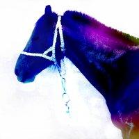 Лошадь :: Арина