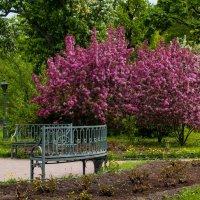 весенний парк :: Елена Кириллова