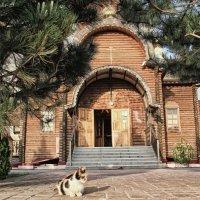 Воинственная кошка :: Allekos Rostov-on-Don