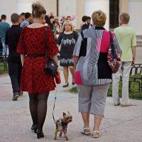 Дамы с собачкой... :: павел Труханов