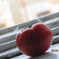 наливной помидор :: Polina Pavliuk
