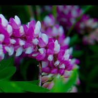 Краски природы :: Руслан