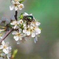 Из жизни жуков :: Анатолий Иргл