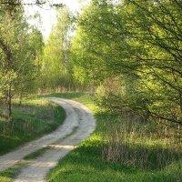Дорога в лето.. :: Владимир Гилясев