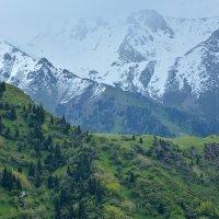 Горы - зелень со снегом :: Горный турист Иван Иванов