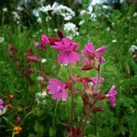 Луговые цветы... :: Galina Dzubina