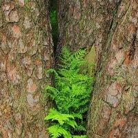 Как часто ошибается природа... :: Лесо-Вед (Баранов)