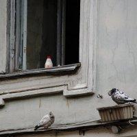 Натюрморт в окне :: Виктор Никитенко