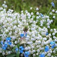 Душистая Весна! :: Ирина Шарапова