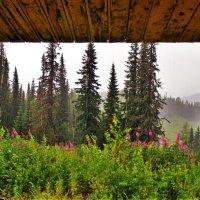 Летний дождь :: Сергей Чиняев
