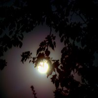 Обнимая луну... :: Арина