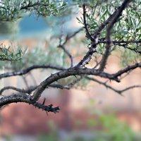 Голубая листва :: Юлия Шарифуллина