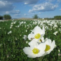 цветочная поляна :: Ольга