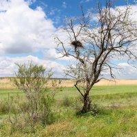 Весна в степи :: Анастасия Богатова