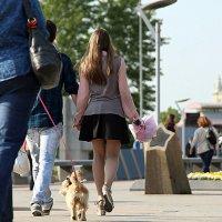 и куда собачонка смотрит :: Олег Лукьянов