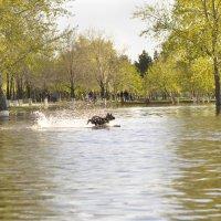 Затопленный парк :: Елена Киричек